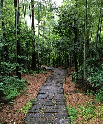 Flora of China - A path between some bamboo.