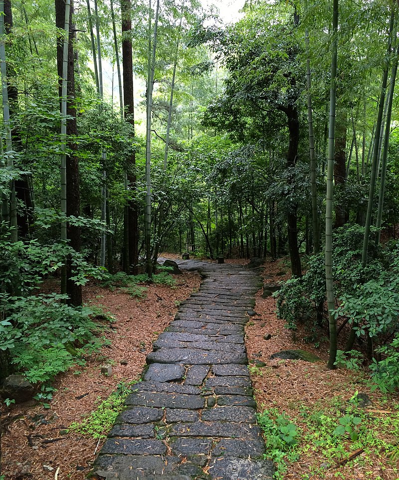 Huangshan bamboo.jpg