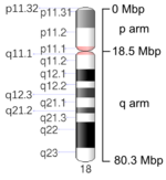 Map of Chromosome 18