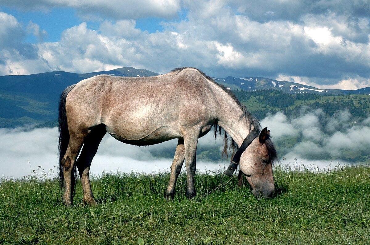 На Прикарпатті чоловік побив сусідку, захищаючи свого коня