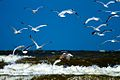 IJmuiden-beach-2013-30 (9043412823).jpg