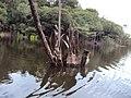 Igapó ilha do severino Urucurituba Amazonas - ทะเลทรายสีเขียวอยู่ใ - panoramio.jpg
