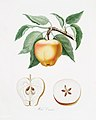 Illustration from Pomona Italiana Giorgio Gallesio by rawpixel00001.jpg