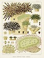 Illustration from The Great Barrier Reef of Australia (1893) by William Saville-Kent from rawpixel's own original publication 00005.jpg
