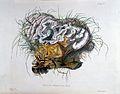 Illustrations of British Mycology. Wellcome L0029987.jpg