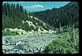 Inter Fork of White River. Possible old road for former mining claim. 101975. slide (eb667733375d48f6a2e3521806593417).jpg