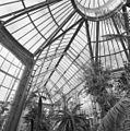 Interieur, palmenkas, lichtkoepel - 20000631 - RCE.jpg