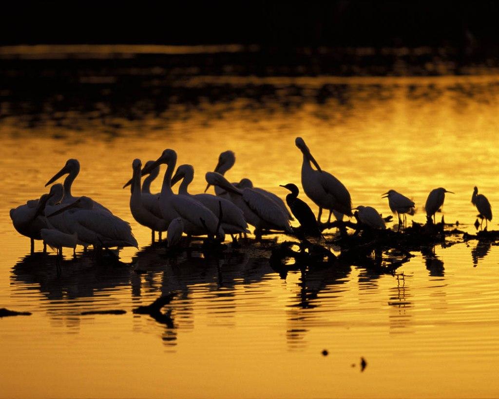 J.N. Ding Darling National Wildlife Refuge (8426360419)