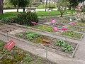 Jardin des plantes Nantes-jardin botanique.jpg