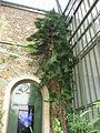 Jardin des plantes Paris Serre australienne et néo-calédonienne1.JPG