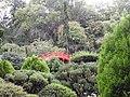 Jardin japonais - pont (Toulouse) (4).jpg