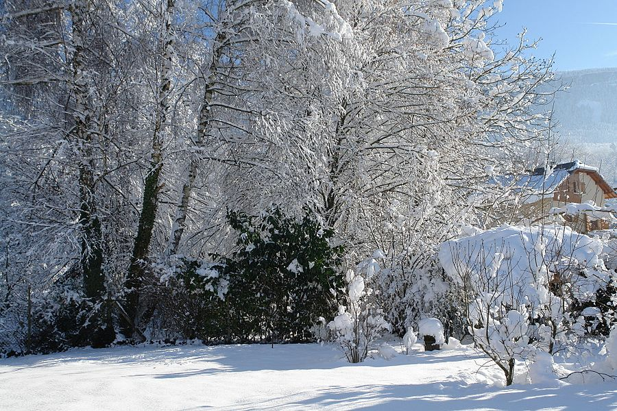 Garden under the snow.