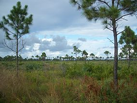 Jensen Beach FL Savannas Preserve SP01.jpg