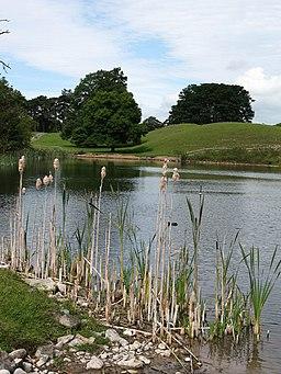 Jervaulx Park pond - geograph.org.uk - 1401438