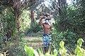 Jeune transportant des fagot de boie7.jpg