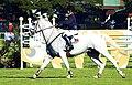 Joker Arroyo equestrian.jpg