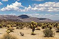 Joshua Tree National Park (California, USA) -- 2012 -- 5663.jpg