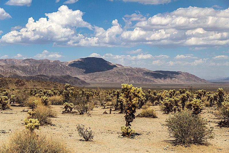 File:Joshua Tree National Park (California, USA) -- 2012 -- 5663.jpg
