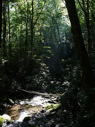 Nantahala National Forest - Joyce Kilmer Memorial Forest
