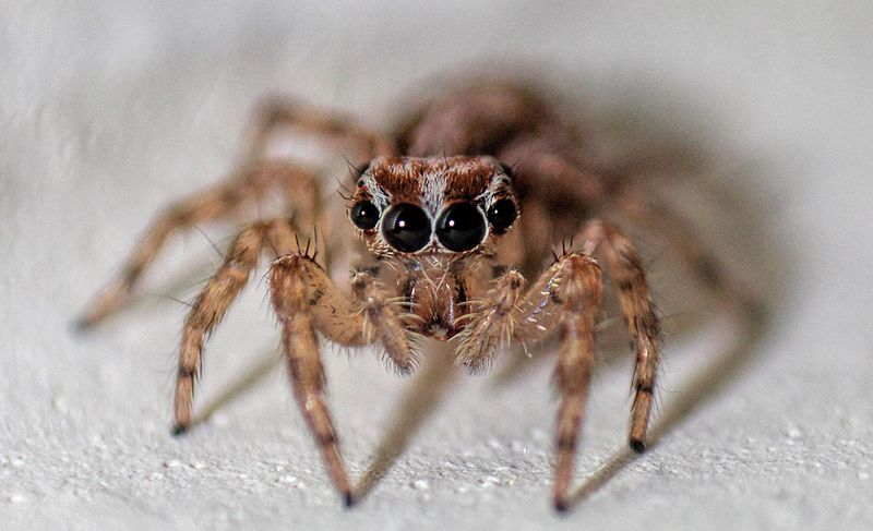 spiders, unwanted guests in your home