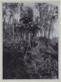 KITLV - 5812 - Kurkdjian - Soerabaja - Vegetation in the Ijen mountains in East Java - circa 1910.tif