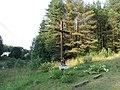 Kalvelių sen., Lithuania - panoramio (2).jpg