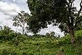 Kimanis Sabah Colony-Ellena-04.jpg