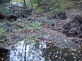 Kinney Run looking downstream from ground level.JPG