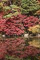 Kobe municipal forest botanical garden21s3200.jpg