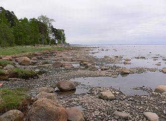 Gulf of Finland - Image: Komarovo bereg