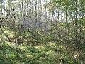 Korina 2011-10-17 Amorpha fruticosa.jpg