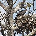 Koshi Tappu Wildlife Reserve, Nepal.jpg