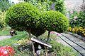 Kto przy Obrze temu dobrze – ogród nad Obrą - Zbąszyń - 001101c.jpg