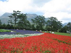 Aso Kujū National Park - Kujū Flower Gardens and Kujū Mountains