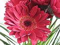 Květiny 6915.jpg