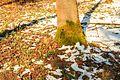 Kvetoucí sněženky v PP Sněženky ve Vysokém lese 32.jpg