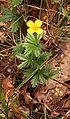 Kwiat 2006.jpg