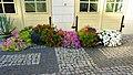 Kwiaty przed dawnym budynkiem gospodarczym. - panoramio.jpg