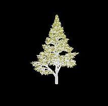 L-system Tree04.jpg