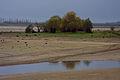Lac du Der Fr.retentiegebied +natuur ontwikkeling,werk voor de natuur, Saxifraga - Jan Nijendijk.2524.jpg