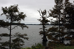 Lake Providence from the end of LA highway 2.jpg