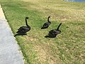 Lakes Entrance VIC 3909, Australia - panoramio (3).jpg