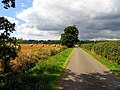 Lane looking towards Lambdens Wood - geograph.org.uk - 37132.jpg