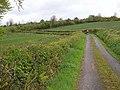 Lane near Keenheen - geograph.org.uk - 1309488.jpg