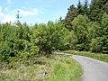 Lane to Llyn Geirionydd - geograph.org.uk - 181434.jpg