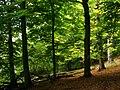Laubwald-am-Teufelssee-bei-Thelkow-19-09-2008-071.jpg