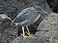 Lava Heron RWD.jpg