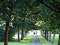 Leafy Evening Stroll - geograph.org.uk - 526776.jpg