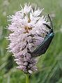 Lepidoptere(s).jpg