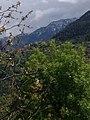 Les montagnes de kabylie.jpg